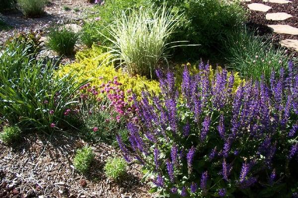 Drought Tolerant Garden Designs Yelp