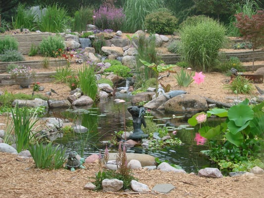 Gorgeous backyard pond complete with plants koi fish and for Plants for pond filtration