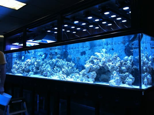 ... experiment on 800 gallon aquarium in our store. Visit Vivid Aquariums