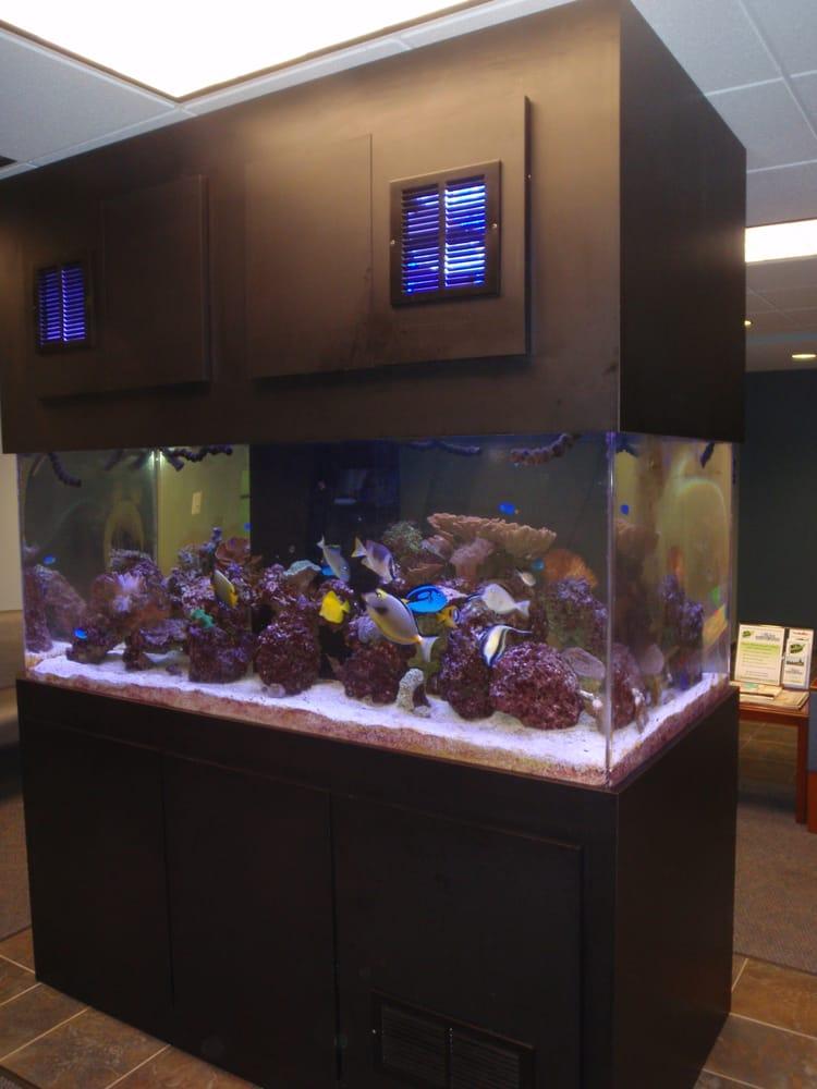 Saltwater Fish Tank Maintenance 8 Gallon 2017 Fish Tank