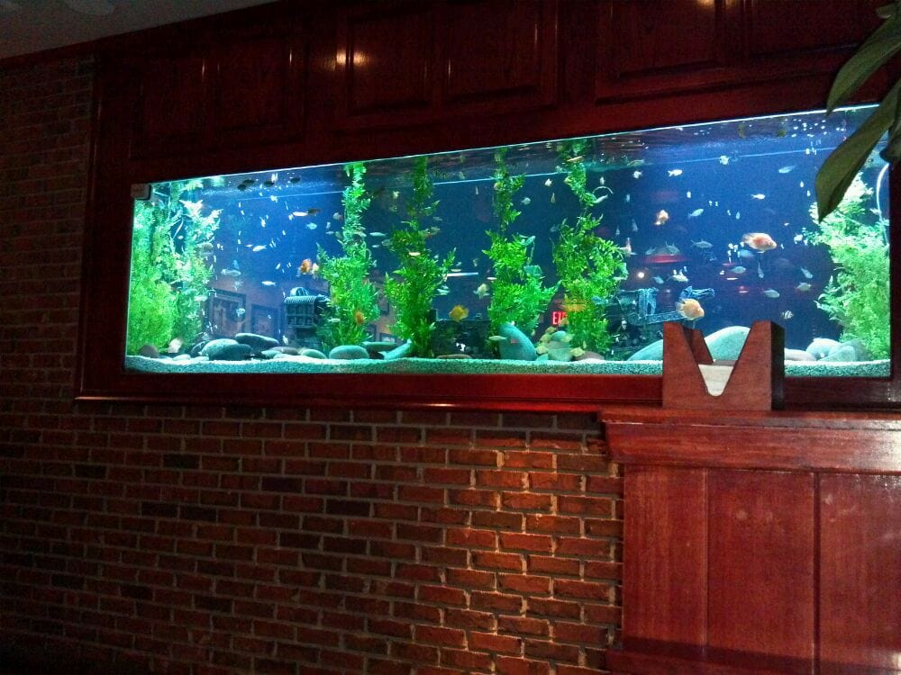 Love the big fish tank yelp for Large fish tank