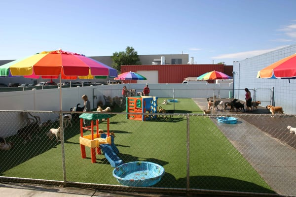 Playful Pooch Dog Daycare And Boarding Denver Co