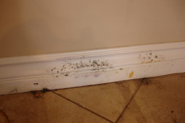 Prep for shower wall tile - Mold On Baseboard Yelp