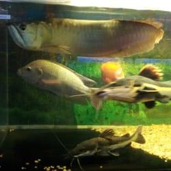 Exotic Freshwater Aquarium Fish Exotic aquarium