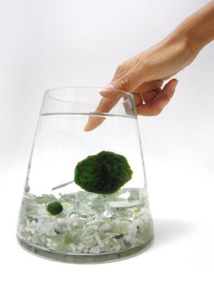 Terrariums, Marimo Aquariums, Eco-friendly home decor | Yelp