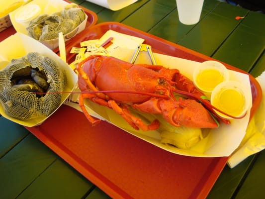 Soft Shell Lobster has a hard shell? | Yelp