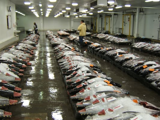 United fishing agency seafood markets for United fishing agency