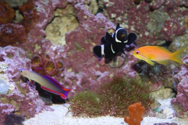 Atlanta Aquarium Duluth Ga Yelp