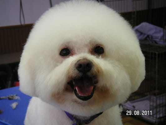 Scissors and suds pet grooming supplies pet stores for Cool dog spa san antonio