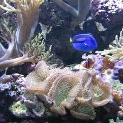 National aquarium closed aquariums washington dc yelp for Aquarium washington dc