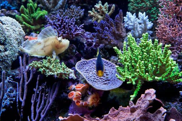 Saltwater aquarium equipment the 1st week assembling for Live saltwater fish