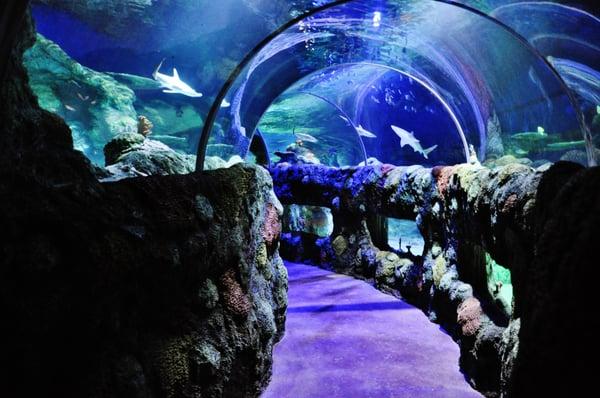 Photos For Sea Life Charlotte Concord Aquarium Yelp