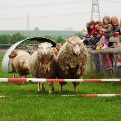 Mead Open Farm & Rare Breeds, Leighton Buzzard, Central Bedfordshire