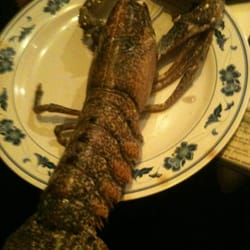 Our lobster before its cooked.  She was so marvelous. The chef personally spoke with us and helped plan the meal. Superb.