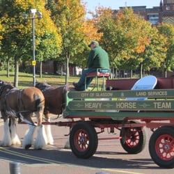 City of Glasgow Heavy Horse Team at Glasgow Green.