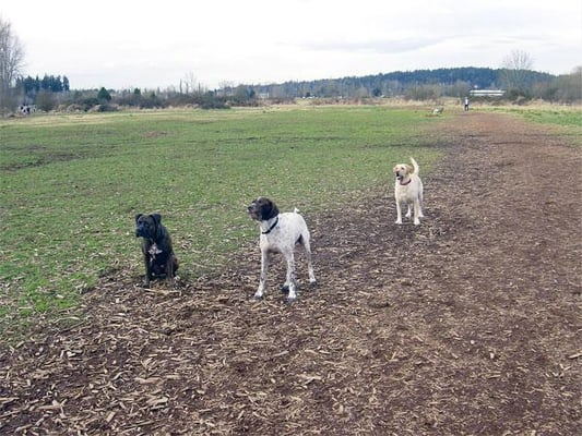 Directions To Marymoor Dog Park