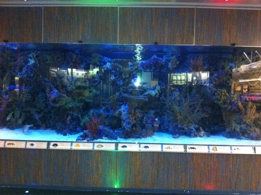 Huge Fish Tank Yelp