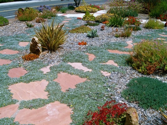 dymondia flagstone walkway in drought tolerant garden