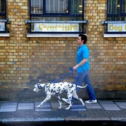 Cats, Dogs & Peace of Mind, London