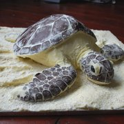 Love to Cake chocolate and vanilla Sea Turtle cake