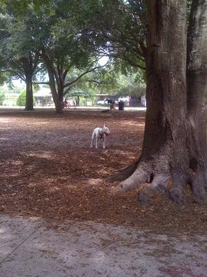 West Orange Dog Park - Dog Parks - Winter Garden - Winter ...
