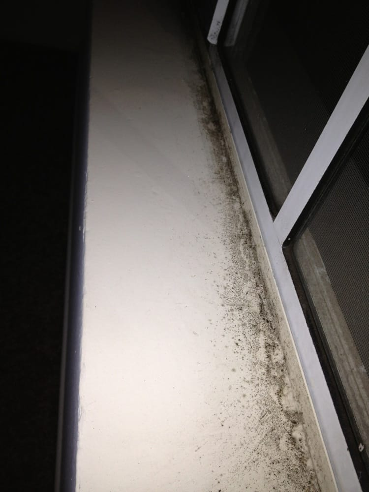 All Along The Window Sill More Bacteria Mold Growing In