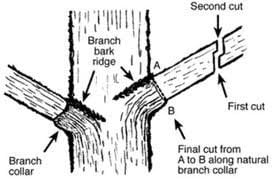 Diagram Of A Proper Cut Trees Company Stands Above Many