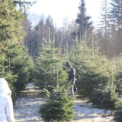 Hemstrom Valley Tree Farm Christmas Trees Christmas